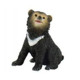 Pui urs asiatic negru